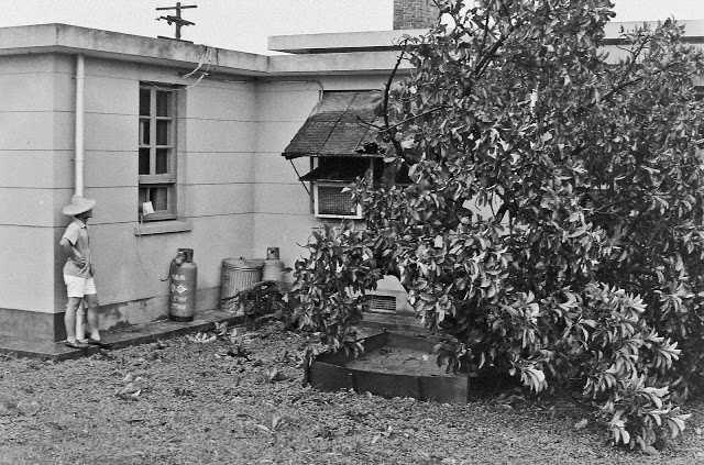 pict0425-1969-typhoon-damage-avacado-tree-13-20-house-1