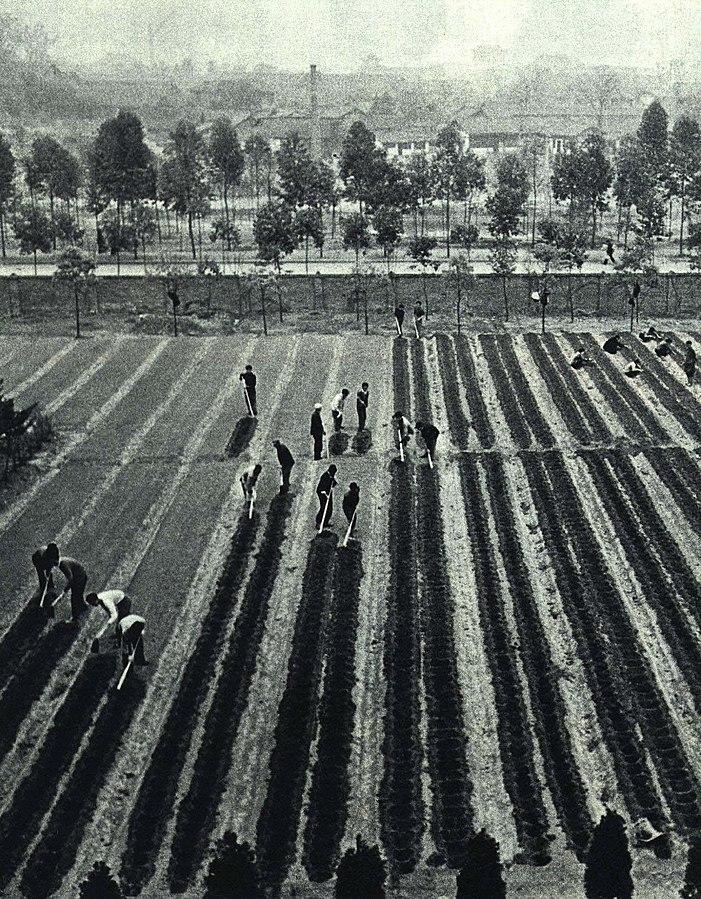 1965-8_1965_四川试验田